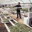 «Apoio a ações de informação no domínio da política agrícola comum (PAC)» para 2017